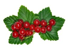 Free Red Currant Close Up Stock Photography - 20199652