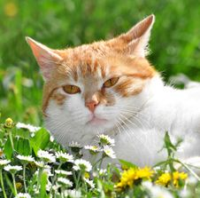 Free Cat In The Grass Stock Photography - 20199702