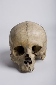 Free Bare Skull Royalty Free Stock Photography - 20199987