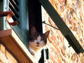 Free Cat At The Window Stock Photos - 2029213