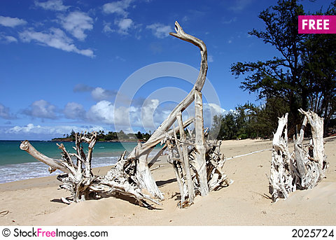 Roots at paia beach Stock Photo