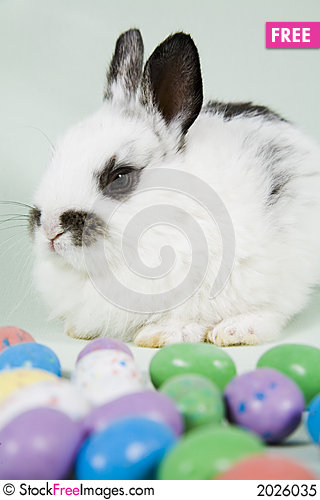Free Easter Scene Royalty Free Stock Photo - 2026035