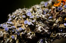 Free Lichen Stock Images - 2020284