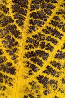 Dry Leaf Stock Photo