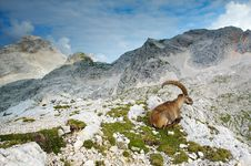 Free Old Male Ibex Stock Images - 2020454