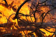 Free Branches In A Fire Stock Photo - 2021190