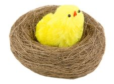 Free Easter Chicks In The Nest Stock Image - 2022021