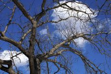 Free Looking Up Through Trees In Winter Royalty Free Stock Photos - 2023018