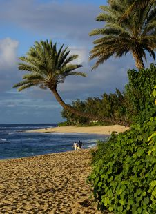 Free Reaching Palm Royalty Free Stock Photos - 2023588