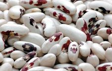 Free Kidney  Bean4 Stock Photo - 2024020