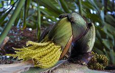 Free Palm Flower Royalty Free Stock Photo - 2025065