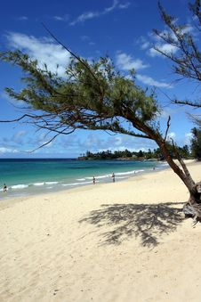 Free Beach Framed By A Tree Stock Images - 2025614