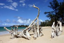 Free Roots At Paia Beach Stock Images - 2025724