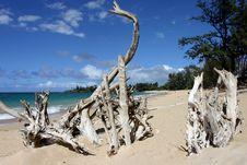 Free Roots At Paia Beach Stock Image - 2025751