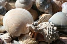 Free Sea Shell Background Stock Photos - 2025923