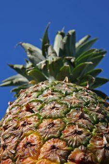 Free Close Up Of Pineapple Stock Photos - 2026413