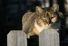 Free Cat On The Fence Stock Photos - 2026493