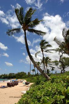 Free Palm Tree Stock Photos - 2026653