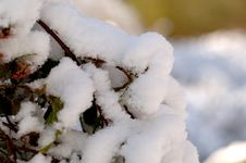 Free Snowy Branch Stock Image - 2026881