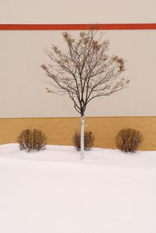 Three Bushes And A Tree Royalty Free Stock Photography