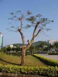 Free Tree Royalty Free Stock Image - 2029366
