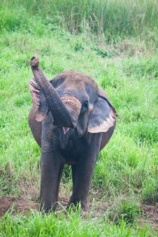 Free Elephant In The Wild Royalty Free Stock Images - 20201589