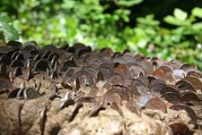 Coins Embedded In Tree Stump Stock Images