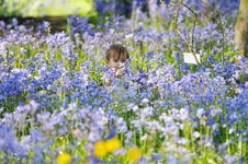 Free Baby Picking Bluebells Stock Photos - 20203783