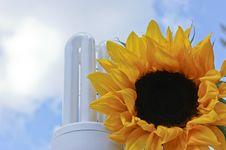 Free Sustainable Green Energy Sunflower Lightbulb Royalty Free Stock Photo - 20205735