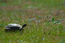 Free The Turtle Royalty Free Stock Photography - 20206907