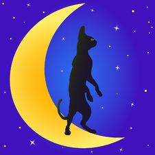 Free Cat On The Moon Royalty Free Stock Photos - 20207298