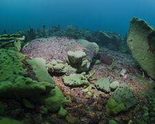 Free Baikal Coral Reef Stock Image - 20207621