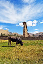 Free Ruins And Cow Stock Images - 20211314