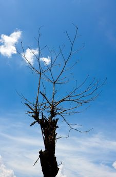 Free Dead Tree Royalty Free Stock Images - 20216199