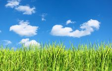 Free Summer Field Of Green Grass Stock Photos - 20219143
