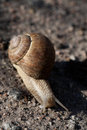 Free Grape Snail Royalty Free Stock Photos - 20227468