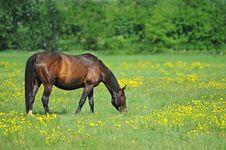 Free Horse Royalty Free Stock Photos - 20221828