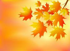 Free Orange Autumn Leaves Stock Image - 20223441