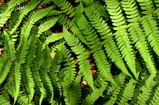 Free Fern Close-up Stock Photography - 20226392