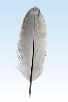 Free Feather Royalty Free Stock Photos - 20227188