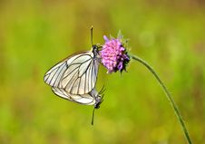 Free Butterfly On A Flower. Stock Images - 20227244
