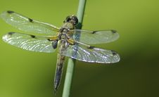 Free Dragonfly Royalty Free Stock Images - 20228059