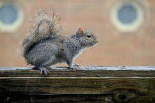 Free Squirrel Under The Rain Stock Photo - 20228960