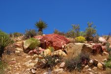 Free Desert Rock Garden Royalty Free Stock Photography - 20229677