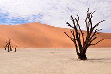 Desert Namib,Namibia,Sossusvlei Pan Royalty Free Stock Photos