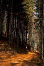 Free Autumn Forest Pathway Royalty Free Stock Photography - 20230517