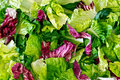 Free Background Of Salad Leaves Stock Photography - 20231712