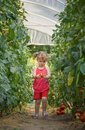 Free Girls Picked Tomatoes Stock Photography - 20235032