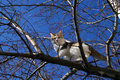 Free Cat On The Tree Royalty Free Stock Images - 20235589