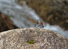 Free Dragonfly S Love Royalty Free Stock Photos - 20233238
